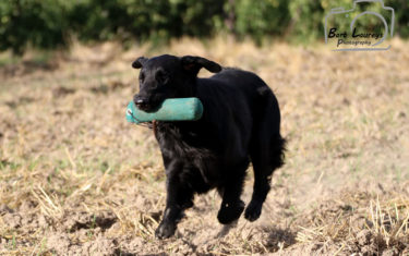 FlatcoatedRetriever-NeverEndingQuest-Jacht