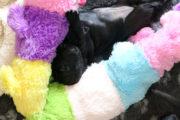 FlatcoatedRetriever_Nest-Week4-Puppie