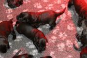 FlatcoatedRetriever_NestWeek32021_pupsYuna