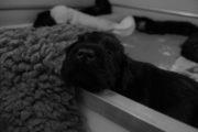 NEQ-PupsW4