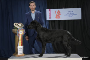 FlatcoatedRetriever-FirstPlace-BraboDogshow