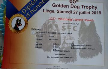 FlatcoatedRetriever-GoldenDogTrophyLiege2019-Diplome