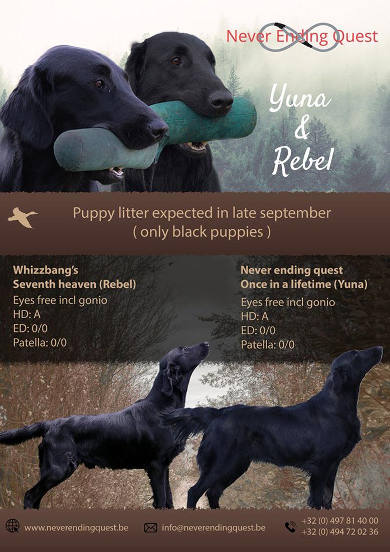 FlatcoatedRetriever-Pups2019-RebelYuna-