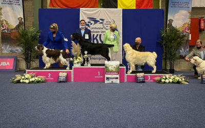 FlatcoatedRetriever-Show-LKV-Genk dogshow